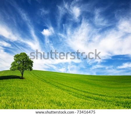 Green tree in a field on blue sky