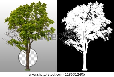 Green tree in summer isolated on transparent background via an alpha channel of great precision. High quality mask without unwanted edge. High resolution for professional composition. #1195312405