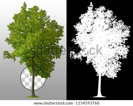 Green tree in summer isolated on transparent background via an alpha channel. Very high quality mask without unwanted edge. High resolution for professional digital composition.
