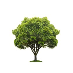 Green tree isolated on white