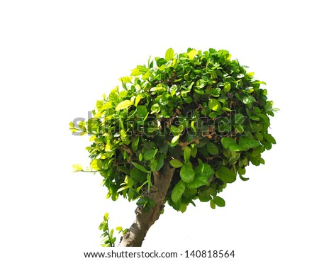 Green tree isolated on white #140818564