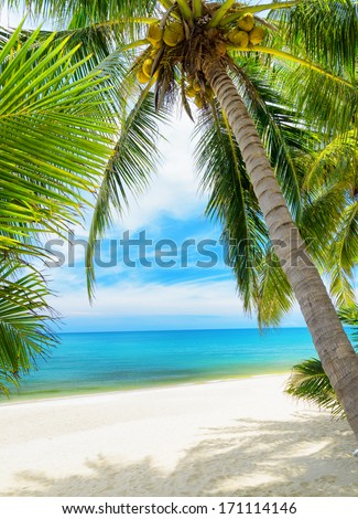 Green tree on a white sand beach.