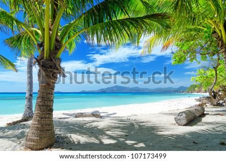Green tree on a white sand beach. Malcapuya island, Coron, Philippines. #107173499