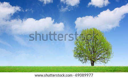 Green tree on meadow with green grass and blue sky with clouds