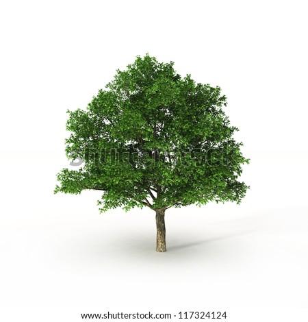 green tree on white