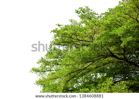 Green tree on white isolated background #1384608881
