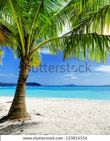 Green tree on  white sand beach. Malcapuya island, Palawan, Philippines.
