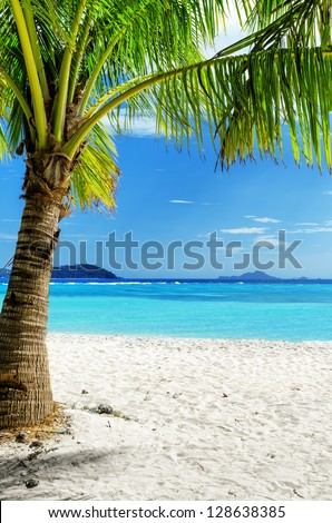 Green tree on  white sand beach. Malcapuya island, Palawan, Philippines.