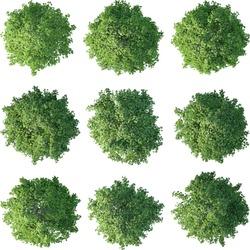 Green tree plan
