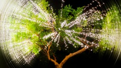 Green tree with a garland of warm lights. Street lighting in the trees. It looks like a firework explosion inside a tree.
