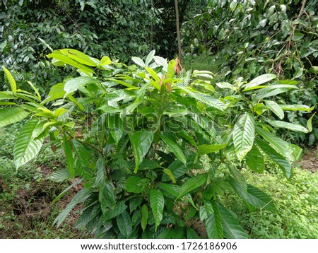 Green tree with natural background