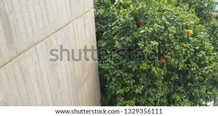 green tree with orange near grey office building  #1329356111