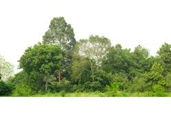 Green treeline isolated on white background.