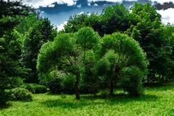 Green trees against a blue sky (unusual beautiful landscape)