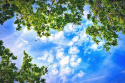 green trees and clouds in the sky, view from the bottom up
