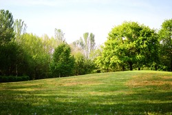 green trees and grass