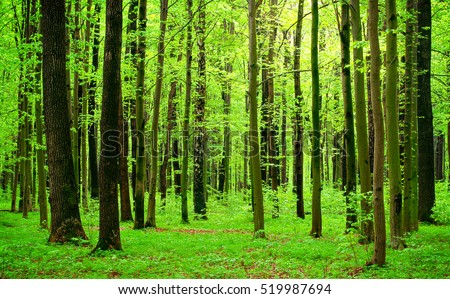 green trees in forest picography free photo