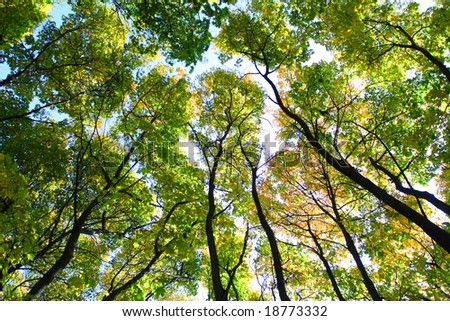 Green trees, blue sky, perspective viev, sun weather.