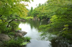 Green trees, grey stones and green water in Japanese garden