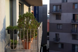 Green trees grown on the apartment balcony