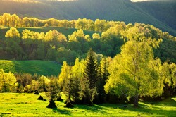 Green trees illuminated by the sunset light near Pleven Hut in Bulgaria.