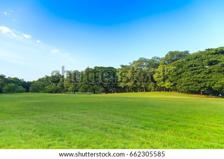 Green trees in beautiful park under the blue sky #662305585