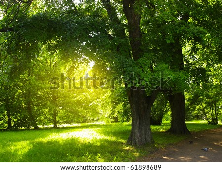 Green trees in park and sunlight - stock photo