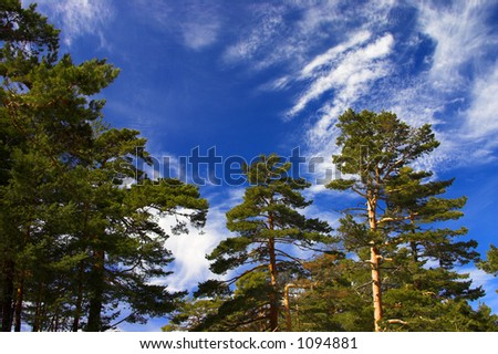 Green trees with a spectacular blue sky background