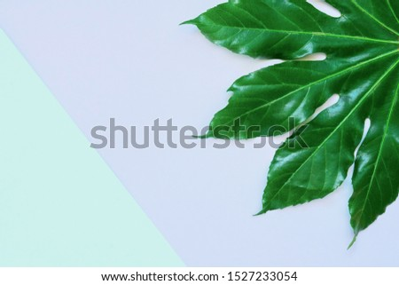 Green tropical leaf on colorful backdrop. Minimal exotic concept with copy space. Copy space, top view.