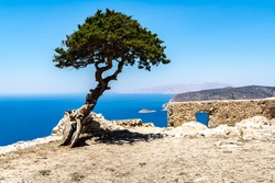 Green tropical tree growing lonely on a greek stone cliff by the sea on a sunny day