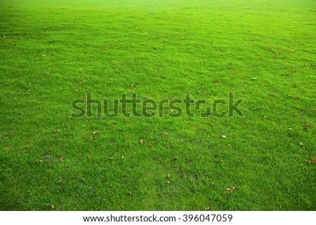 green turf on the pitch Zdjęcia stock ©