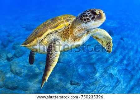 Green Turtle Stock foto ©