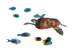 Green turtle and tropical fishes isolated over white