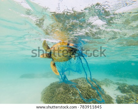 Green Turtle entangled in a discarded fishing net - Shutterstock ID 783911845