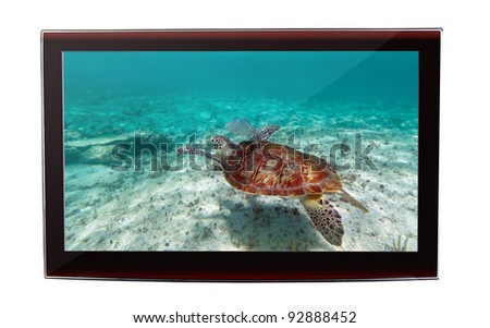 Green turtle snorkeling in Caribbean Sea on the flat TV display
