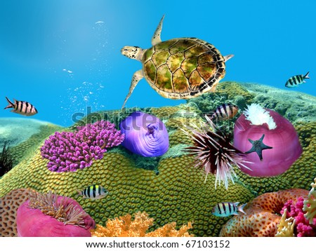 Green turtle underwater on a coralal reef