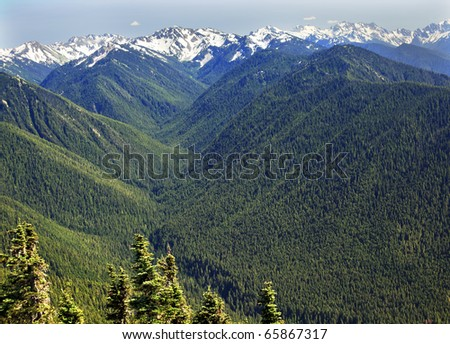 Green Valleys Evergreens, Snow Mountains Hurricane Ridge Olympic National Park Washington State Pacific Northwest  Ridge Line