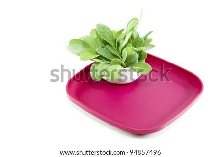 green vegetable - stock photo