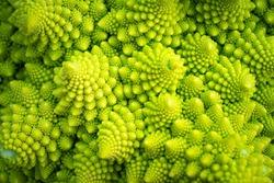 Green vegetable background of Romanesco cabbage. Romanesco cabbage close-up. Agricultural business. Growing vegetables. Plant growing.