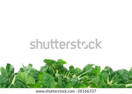 fruits and vegetables border. Green vegetable border