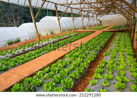 Green Vegetables Growing In The Farm #252291280