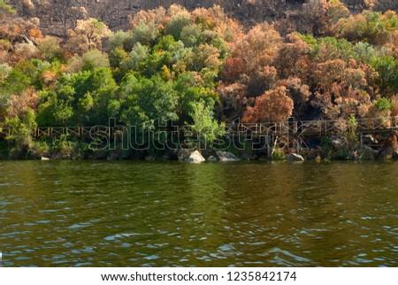 green vegetation and burn vegetation #1235842174