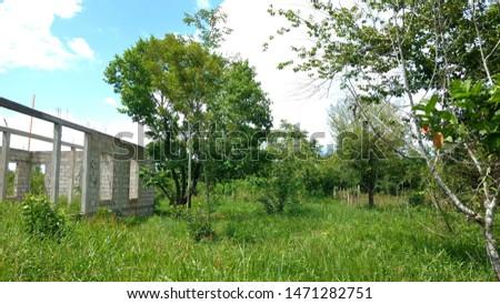 Green vegetation in free countryside rural area, Peten Guatemala