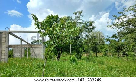 Green vegetation in free countryside rural area, Peten Guatemala #1471283249