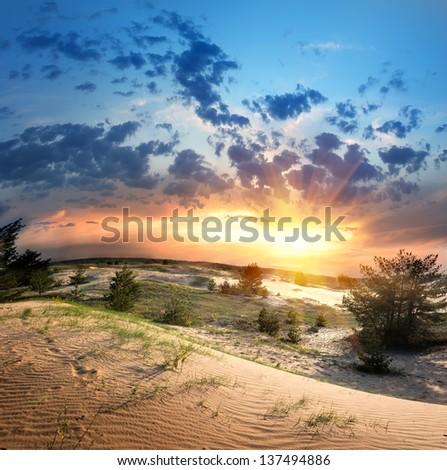 Green vegetation in the desert at sunset - stock photo
