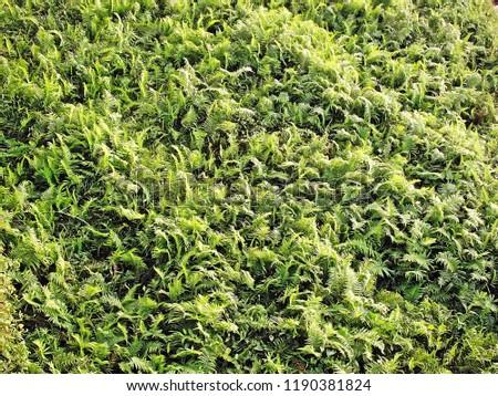 Green vegetation is natural #1190381824
