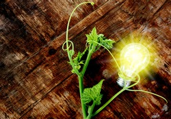 Green vine picture Entangled with the light bulb With yellow light coming out on the brown wood background Concepts from alternative energy from nature.