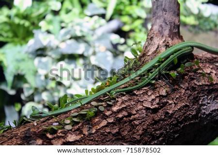 Green Vine Snake #715878502