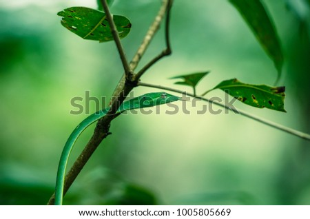 green vine snake climbing tree with its tongue out #1005805669