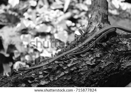 Green Vine Snake - Grayscale #715877824
